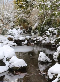 Snow-covered banks, rocks, shrubs and trees that line one of our many streams as seen from a bridge - Winter 2017.